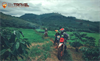 Southern Vietnam Motorbike Tour 4 days To Ke Ga